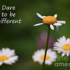 Kerri Farley - Dare To Be Different