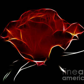 Vivian Christopher - Dark Rose
