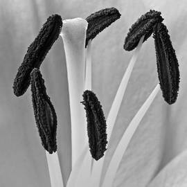 Dawn Currie - Day Lily Heart