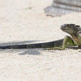 John Bailey - Day of the Iguana