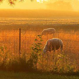 Tina M Wenger - Daybreak Two