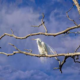 Kathleen Bishop - Daydreaming Heron