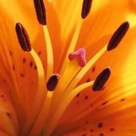 Angela Davies - Daylilies Make The Day
