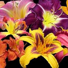MTBobbins Photography - Daylily Banner
