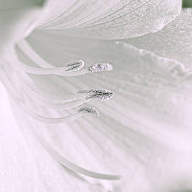Jennie Marie Schell - White Daylily Flower Soft Green
