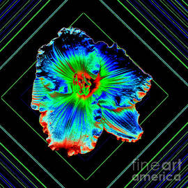 ImagesAsArt Photos And Graphics - Daylily In Neon