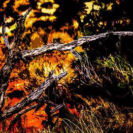 Onyonet  Photo Studios - Dead Cactus