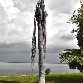 Timothy Lowry - Dead Palm