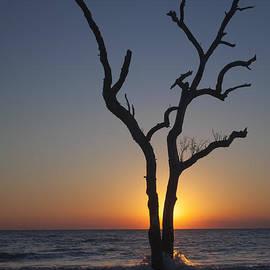 Maria  Struss - Dead Tree at Sunrise