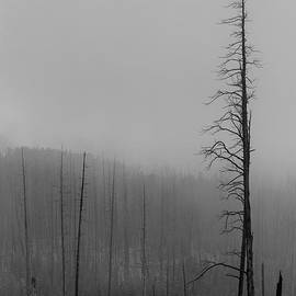 Troy Montemayor - Dead Trees Mount Washburn WY