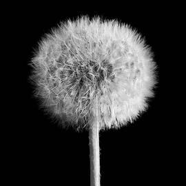 Ken Claypool - Death and Life