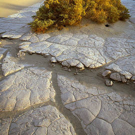 Inge Johnsson - Death Valley Mudflat