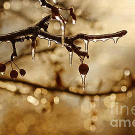 Darren Fisher - December Ice