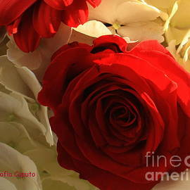 Photographic Art and Design by Dora Sofia Caputo - December Rose