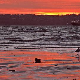Brian Chase - December Sunset