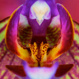 Leslie Crotty - Deep Inside The Mouth Of An Orchid
