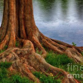 Dan Carmichael - Deep Roots - Tree on North Carolina Lake
