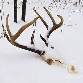 Gerald Strine - Deer Departed 1