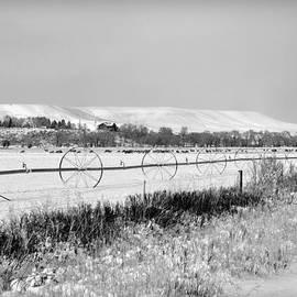 Lisa Holland-Gillem - Deer Herd in Winter