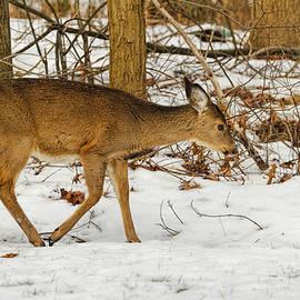 Geraldine Scull   - Deer In Snow In The Woods