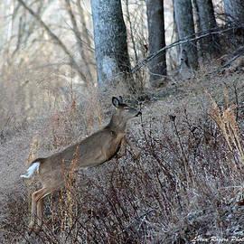 Lorna Rogers Photography - Deer Moving Upward