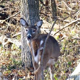 Robyn King - Deer Smiles