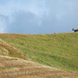 Mary Lee Dereske - Deer Taking Flight