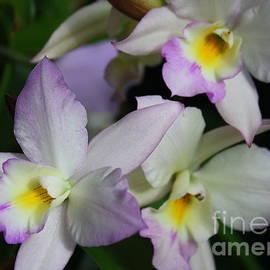 Photographic Art and Design by Dora Sofia Caputo - Delicate Trio - Orchids