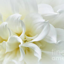 Kaye Menner - Delicate White Softness