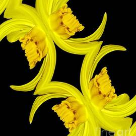 Rose Santuci-Sofranko - Delightful Daffodil Abstract