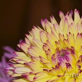 Chad and Stacey Hall - Delightful Dahlia