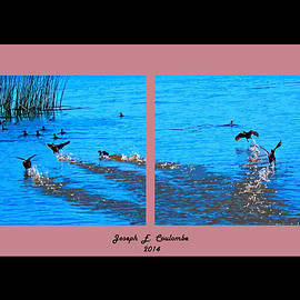 Joseph Coulombe - Delta Water Birds
