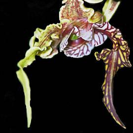 Winston D Munnings - Alien Orchid