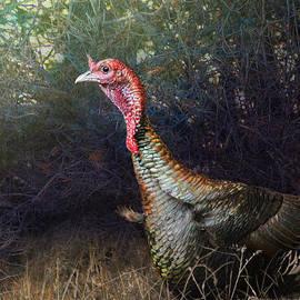 R christopher Vest - Dense Oak Southwestern Wild Turkey