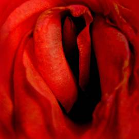 Shirley Sirois - Depths of Rose