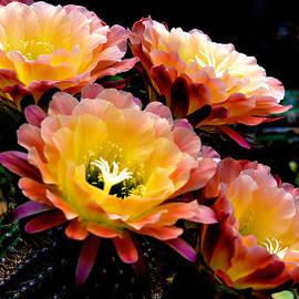 Julie Palencia - Desert Apricot Glow 6