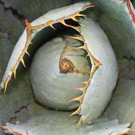 John Telfer - Desert Flower in Coronado