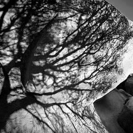 Denise Dube - Desert Heart