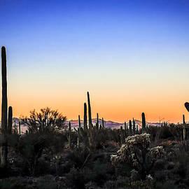 Barbara Manis - Desert Landscape