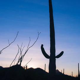 Barbara Manis - Desert Morning
