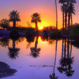 Eddie Yerkish - Desert Oasis
