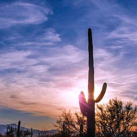 Barbara Manis - Desert Sunset