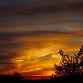 Ed  Cheremet - Desert Sunset