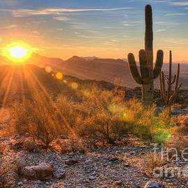 Eddie Yerkish - Desert Sunset II