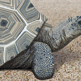 Jacqueline Barden - Desert Tortoise