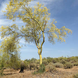 Janice Sakry - Desert Tree