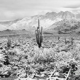 Nicholas  Pappagallo Jr - Desert Winter
