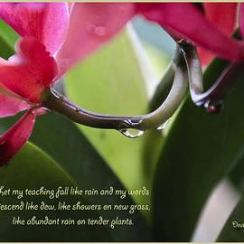 Debbie Nobile - Deuteronomy  32 verse 2