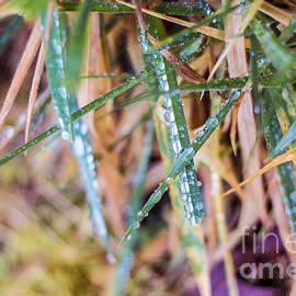 Alanna DPhoto - Dew Drop Color