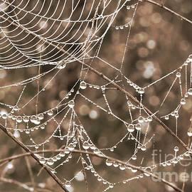 Carol Groenen - Dewdrop Web in Sepia